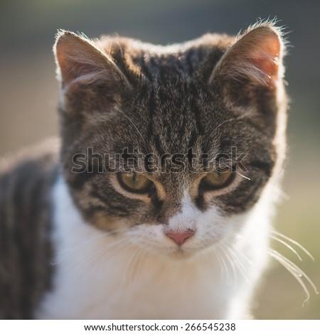 Cute cat posing outdoor - stock photo