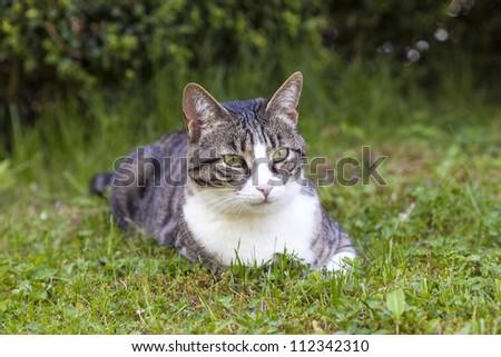 cute cat relaxing in the garden - stock photo