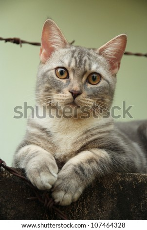 Cute cat sit at the old wall - stock photo