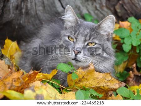 cute cat sits in fallen leaves - stock photo