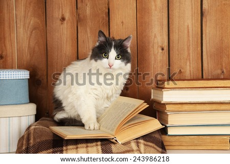 Cute cat sitting with book on plaid  - stock photo