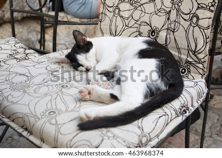 cute cat sleeping in a chair