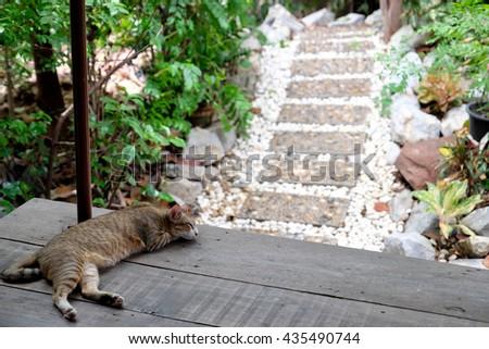cute cat sleeping in the garden - stock photo