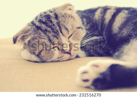 cute cat sleeping on the bed with retro filter effect - stock photo