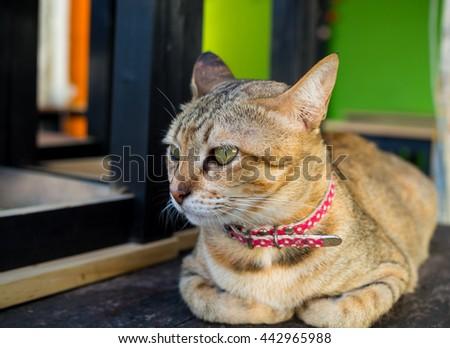 Cute cat sleeping on wood table, Eye focus - stock photo