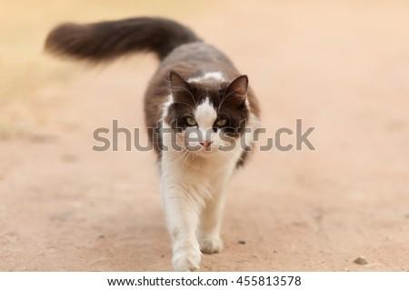 cute cat walking down the street - stock photo
