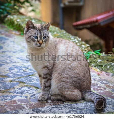 cute  cat with beautiful fur on the street