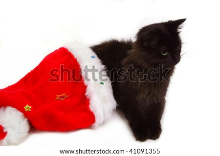 cute cat with christmas bonnet