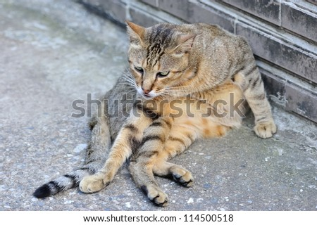 Cute cat with strange gesture - stock photo