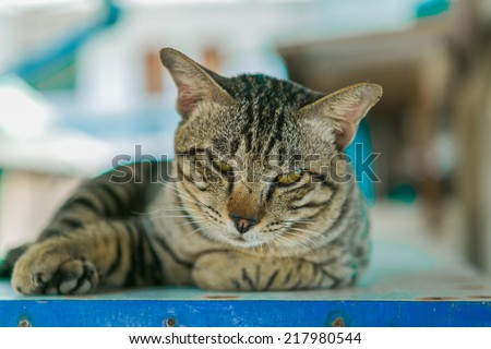 Cute catat relaxes on the wooden table. - stock photo