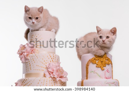 Cute cats are sitting on tops of poundcakes with marchpanes. Isolated photo for wallpaper.