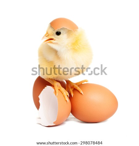 Cute chicken on eggs - stock photo
