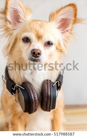 Cute Dog Listening To Music