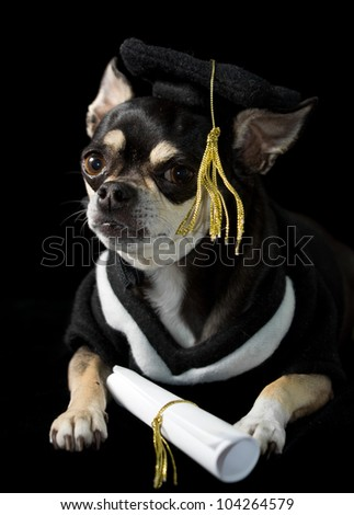 Wonderful Graduation Cap Black Adorable Dog - stock-photo-cute-chihuahua-in-cap-and-gown-for-graduation-on-black-background-104264579  Pic_2510046  .jpg