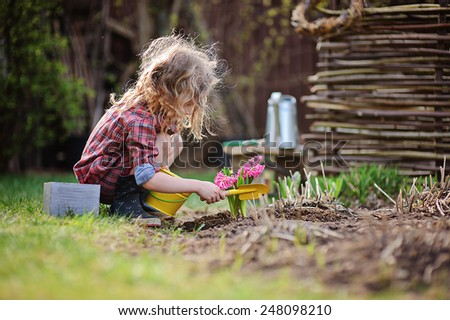 cute child girl in plaid dress plays little gardener and planting hyacinth flowers in spring garden - stock photo