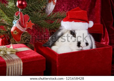 Cute Christmas bunny under the tree on gift box with red velvet background - stock photo