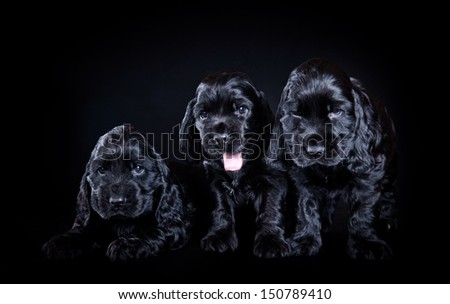 cute cocker spaniel puppy - stock photo