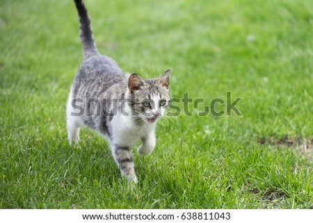 cute colorful kitten running in the grass