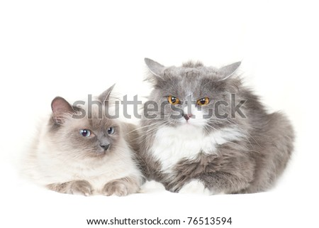 Cute couple of cats sit on white and look to each other - stock photo