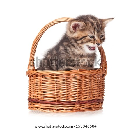 Cute crying kitten in the wicker basket isolated on white background