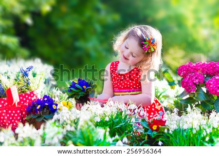 Cute curly little girl in a red summer dress working in the garden watering first spring flowers on a sunny warm day. Kids gardening. Children working in the backyard. Child with water can. - stock photo