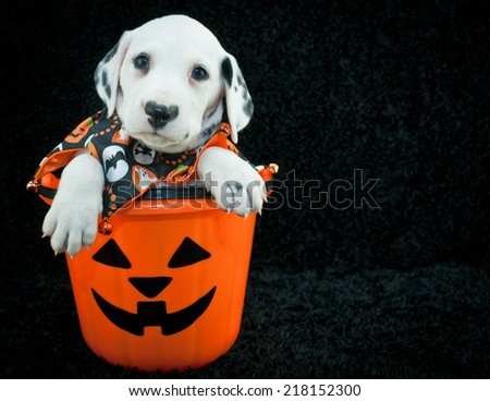 Cute Dalmatian puppy sitting in a Halloween bucket with copy space, on a black background. - stock photo