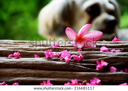 Cute dog and beautiful flowers on wooden