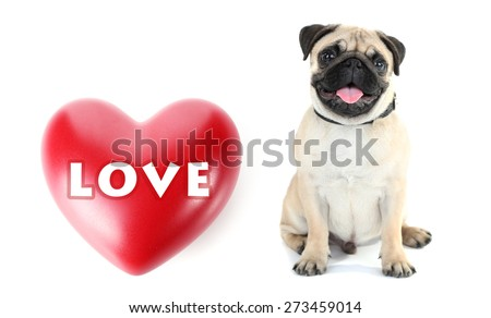 Cute dog and big heart isolated on white - stock photo