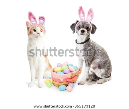 Cute dog and cat together wearing Easter Bunny ears with basket filled with pastel color eggs - stock photo