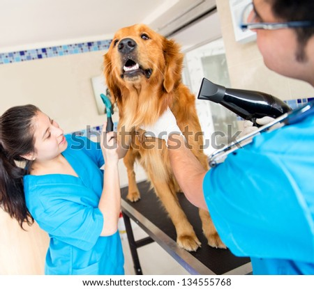 Cute dog at the vet being groomed with a hairdryer - stock photo