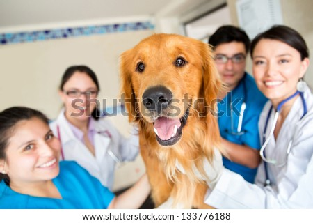 Cute dog at the vet with a group of doctors and assistants - stock photo