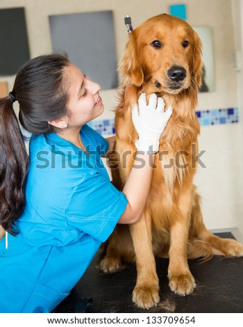Cute dog being pampered at the vet