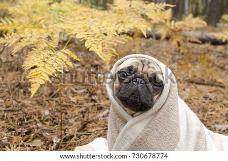 Wrapped In A Dog Blanket Stock Images Royalty Free Images
