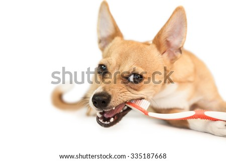 Cute dog chewing on toothbrush on white background