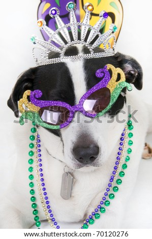 Cute dog dressed up for party - stock photo