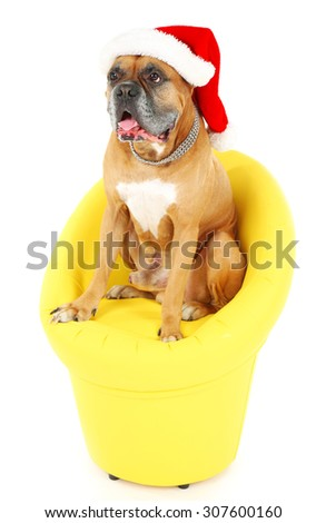 Cute dog in Christmas cap, sitting in yellow armchair isolated on white background - stock photo