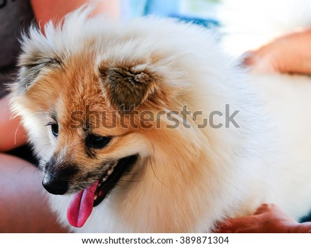 cute dog in outdoor