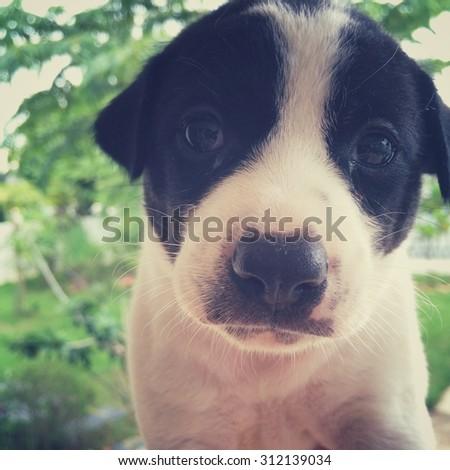 cute dog in retro filter effect - stock photo
