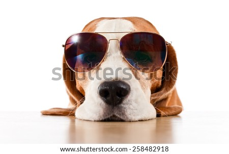 cute dog in sunglasses, isolated on white - stock photo