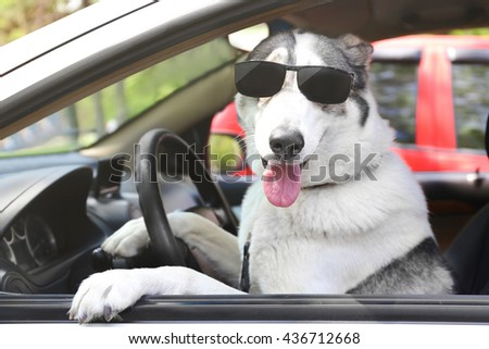 Cute dog in sunglasses sitting in car - stock photo