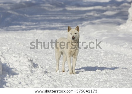 Cute dog in the snow during a cold winter.