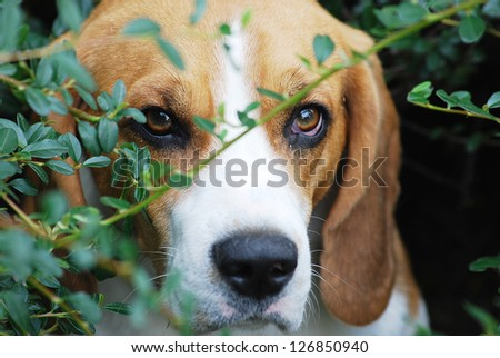 Cute dog is playing outside - stock photo