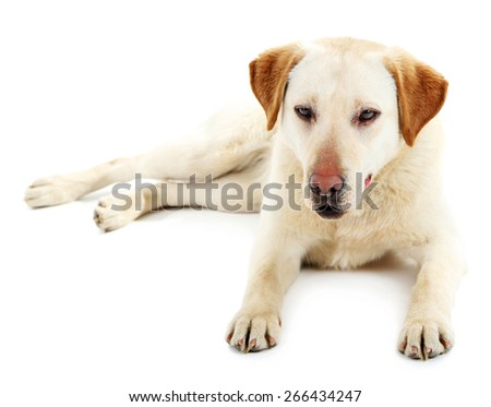 Cute dog isolated on white background