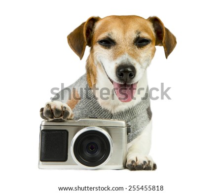 Cute dog Jack Russell terrier photographer smiled contentedly in an elegant pullover - stock photo