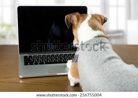 Cute dog Jack Russell terrier works in the office at the computer. Licked. Black background you can place your information - stock photo