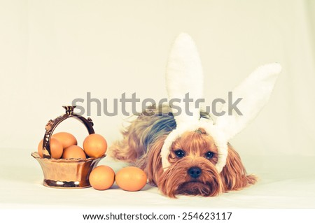Cute dog like easter bunny lying portrait with eggs in golden basket looking at camera. Retro photo effect.