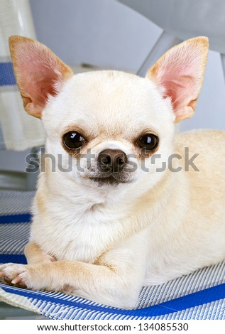 cute dog looking at camera