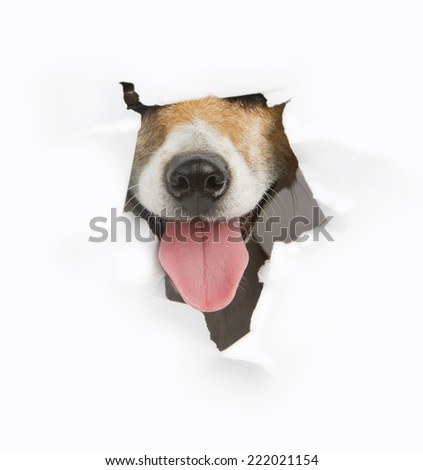 Cute dog muzzle nose sticking out of a hole in the white paper. Place for your text - stock photo