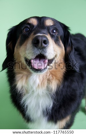 cute dog obeying on colored background - stock photo