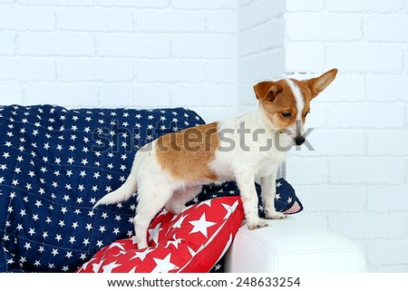 Cute dog on sofa, on white wall background - stock photo